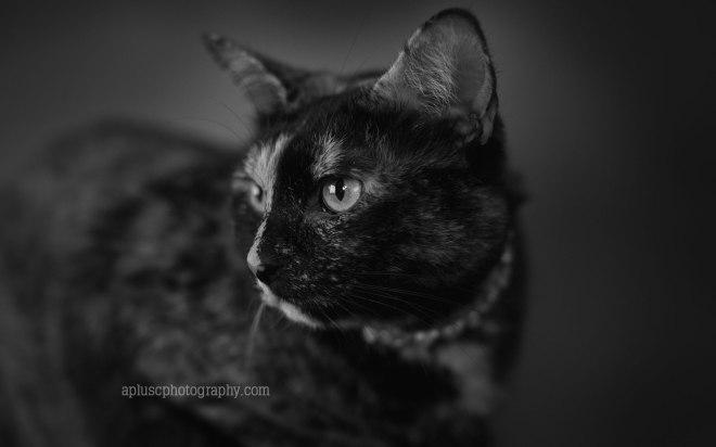 apluscphotography_pets47