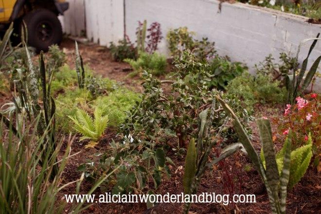 aliciainwonderlandblog10