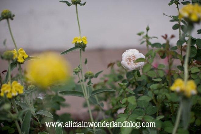 aliciainwonderlandblog2