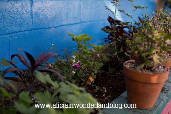 aliciainwonderlandblog36