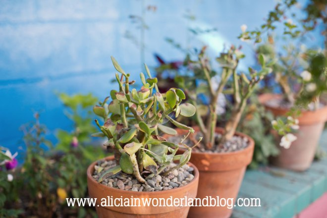 aliciainwonderlandblog37
