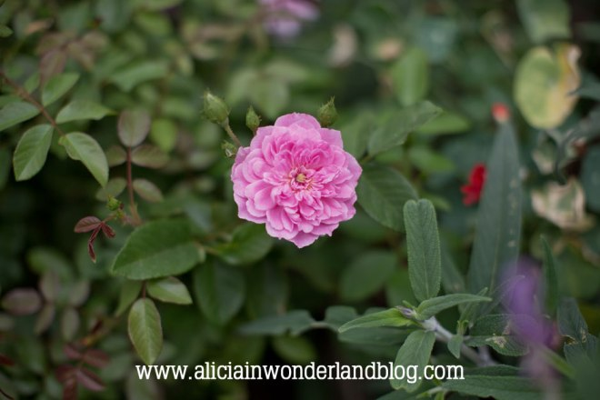 aliciainwonderlandblog4