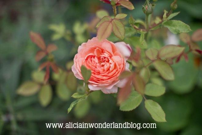 aliciainwonderlandblog5