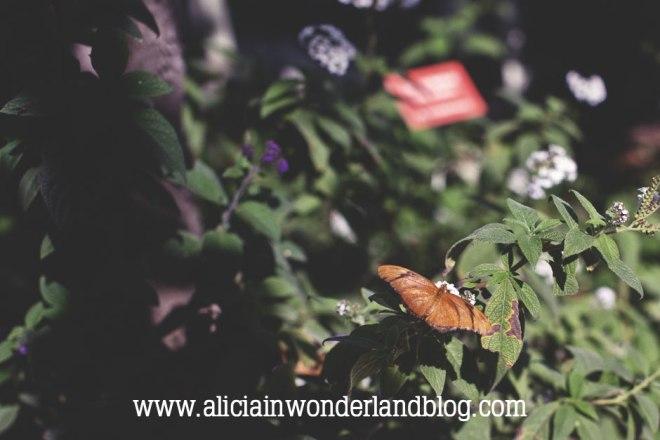 aliciainwonderlandblog3