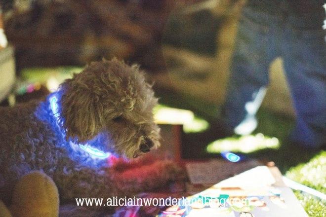aliciainwonderlandblog